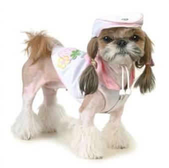 ropa-perros-6