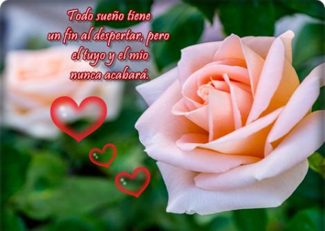 flores-de-rosas-bonitas-con-frases-de-amor-para-facebook1