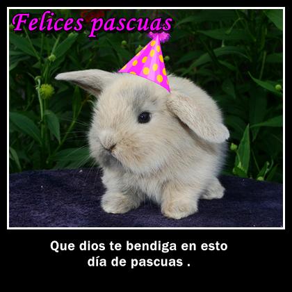 imagenes de conejo para el dia de pascuas