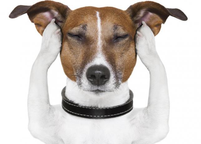 5-cosas-que-no-sabias-sobre-los-perros-5