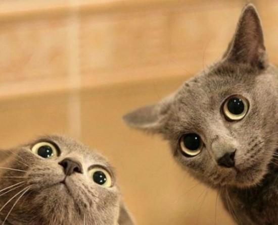Enfermedades-de-gatos
