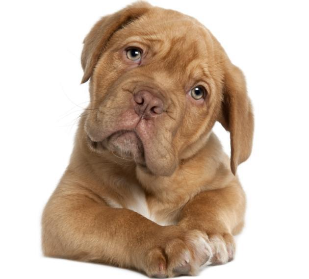 Por-qué-los-perros-mueven-la-cola