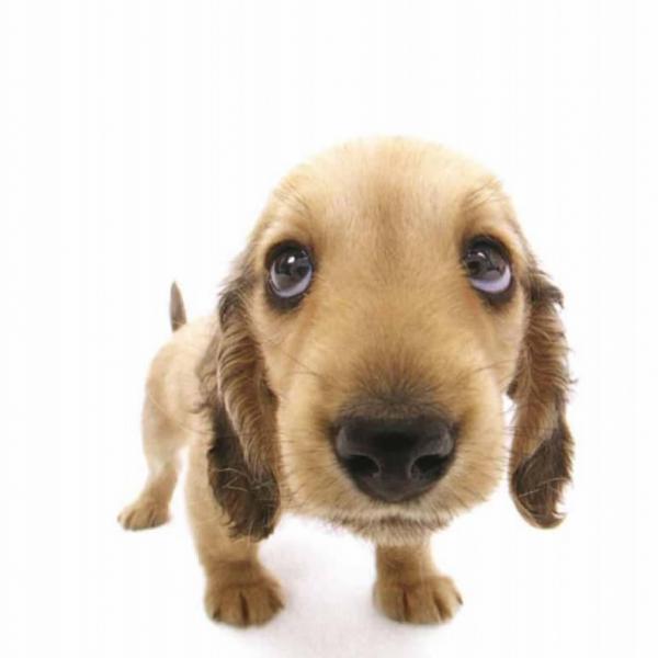 img_nombres_para_perros_originales_y_bonitos_5579_600