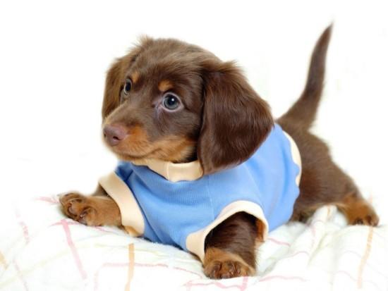 mejores-nombres-perros