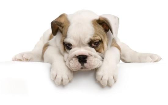 perro-cachorro-407