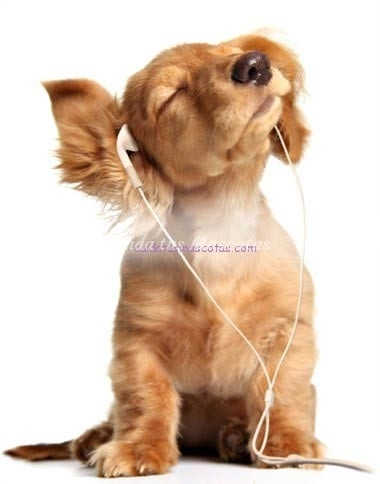 perro-con-cascos