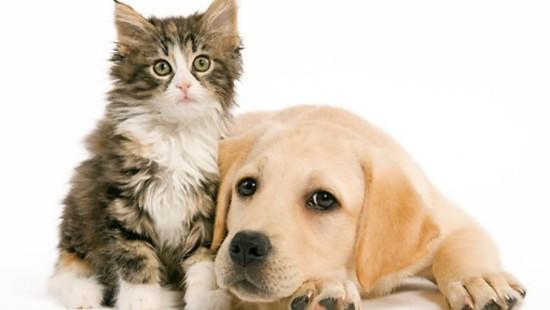 perro_y_gatos