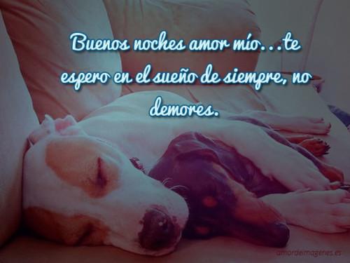 buenas-noches-mi-amor-abrazo-cachorros