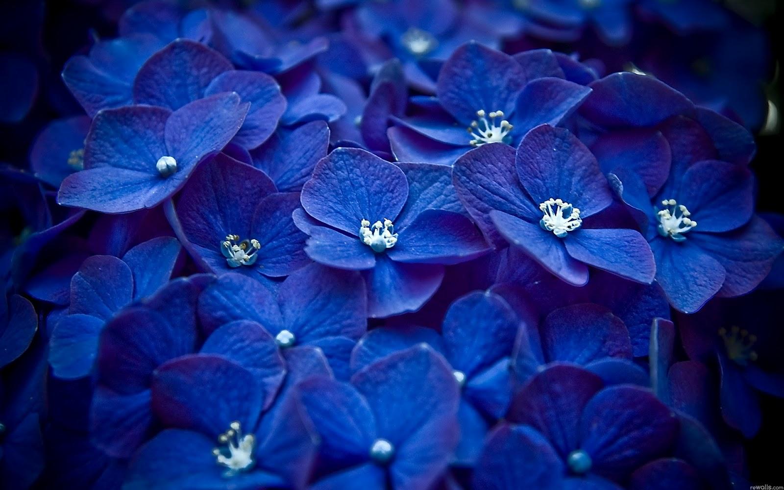 Postales Con Flores Azules Para Descargar