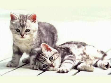 gatitos-pequenos1