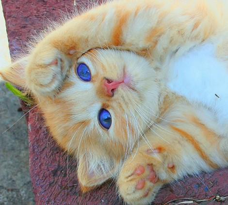 gatos-gatos-lindos-y-tiernos