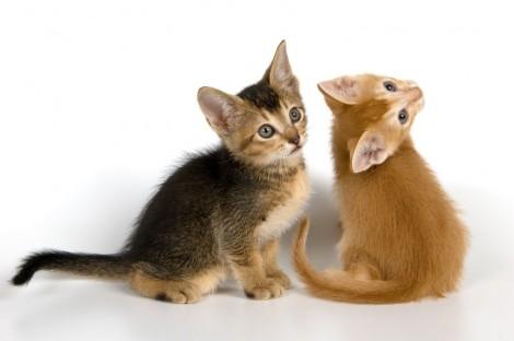 gatos-muy-tiernos-y-curiosos