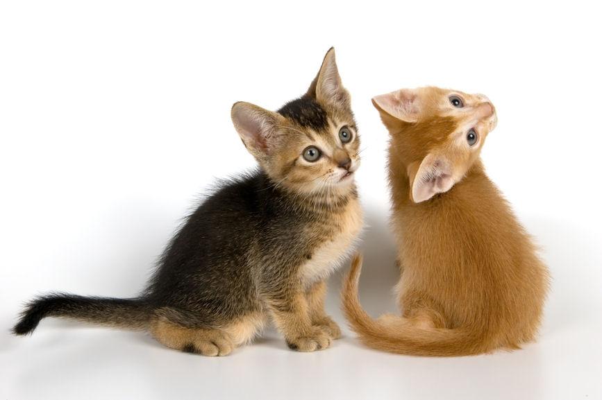 Imágenes de dulces gatitos