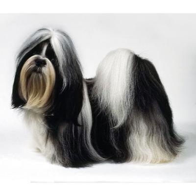 servicio_de_peluqueria_canina_profesional_a_domicilio_banos_y_cortes_de_pelo_para_perros_y_gatos-4b21976c74f5909eafa816ce9