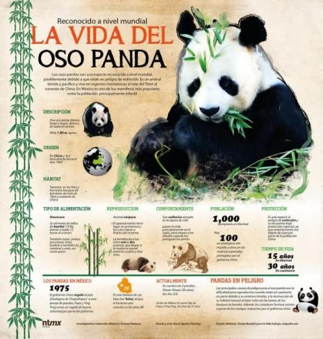 infografia_la_vida_del_oso_panda