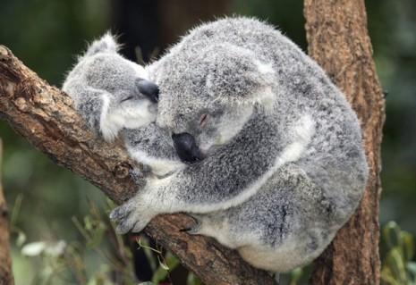 abrazos-animales-1