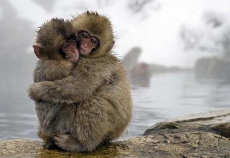 abrazos-animales-3