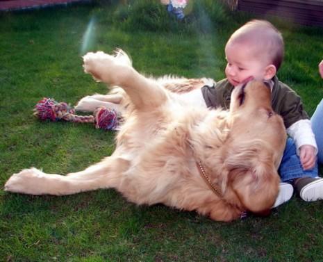 bebés y perros todogolden