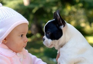bebes-y-perros-300x208