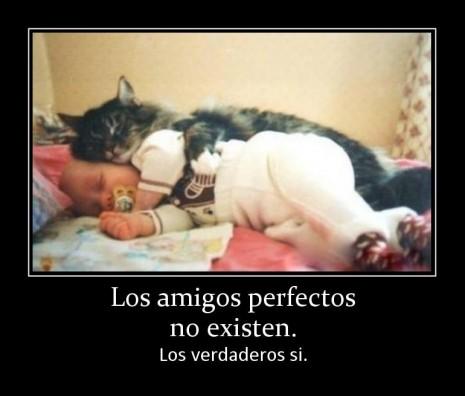 amigos-perfectos