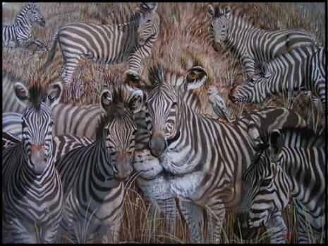 zebrasleon