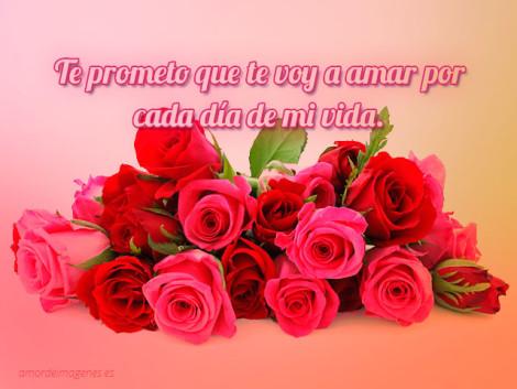 Rosas Con Frases De Amor Y Amistad Para Dedicar A Mi Novio
