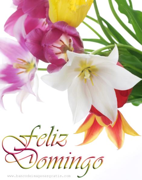 feliz-domingo-flores-de-colores-con-mensaje-positivo-para-compartir-en-facebook
