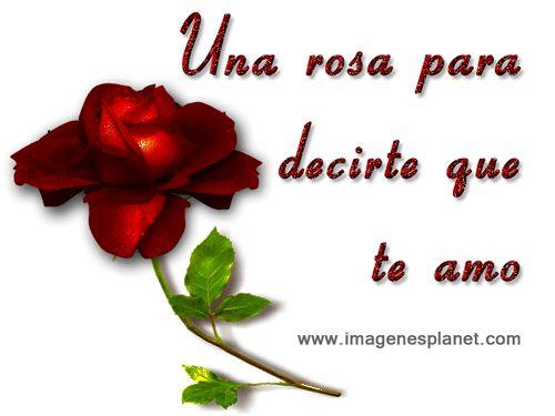 Rosas Rojas Con Frases De Amor: Rosas Con Frases De Amor Y Amistad Para Dedicar A Mi Novio