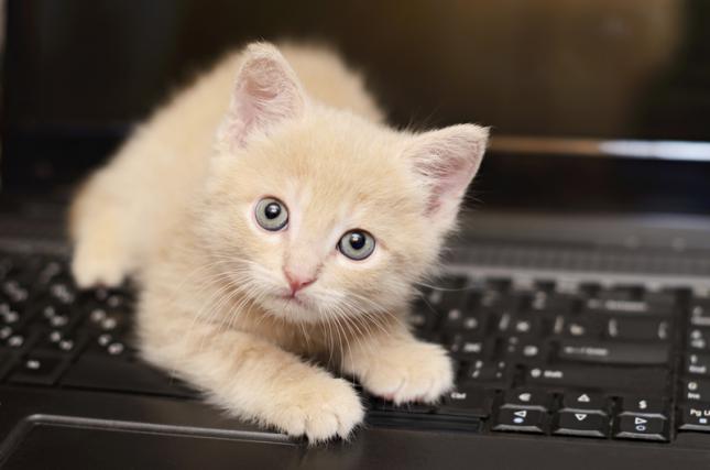 Conocimiento-gatuno-30-curiosidades-sobre-los-gatos