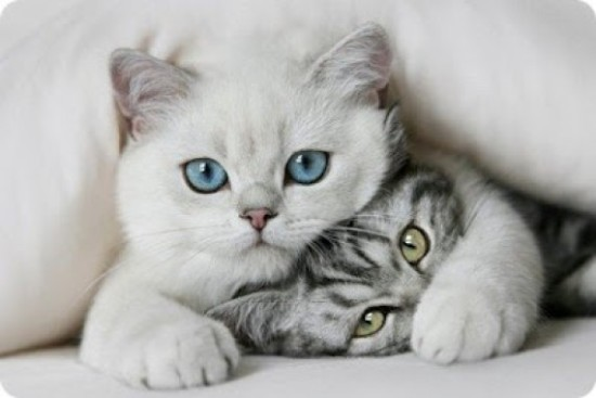 Cuánto-viven-los-gatos