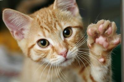 gato (1)