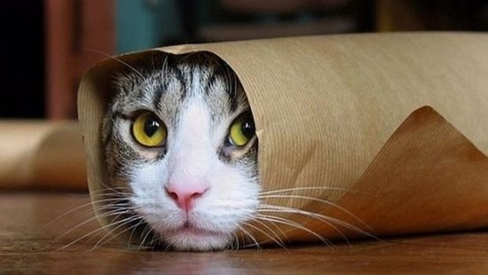 gatos-twitter1--620x349