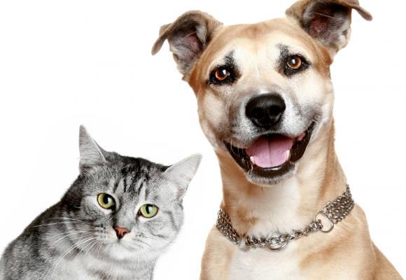 gatos-y-perros