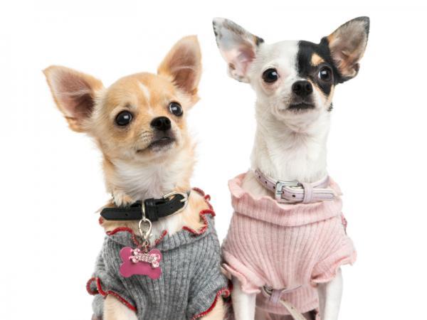 img_nombres_para_perros_originales_y_bonitos_5579_paso_5_600