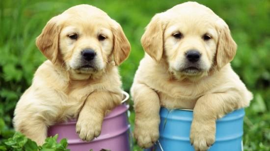 las-mejores-razas-de-perros-para-los-ninos