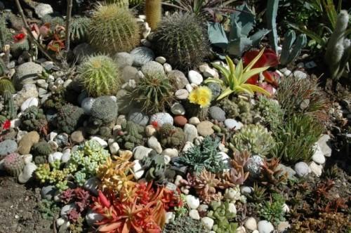 45 ideas de jardines con rocallas en im genes - Jardines con cactus y piedras ...